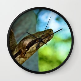 The Boa Constrictor  Wall Clock