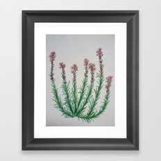 Heller's Blazing Star Framed Art Print