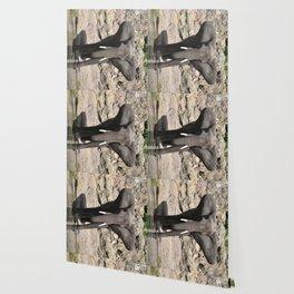 Elephant Ears Wallpaper