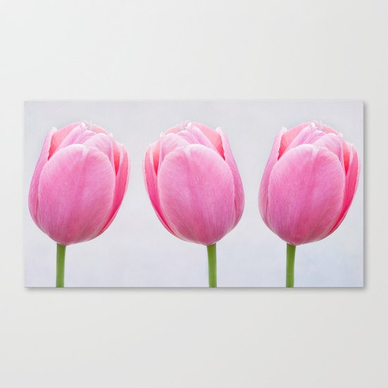 tulipes 3 Canvas Print