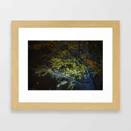 Autumn Tree at Night Framed Art Print