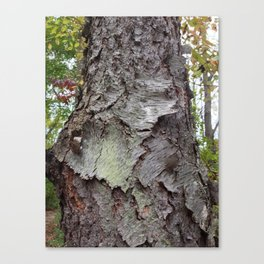 OLD BARK (Whiting Road Nature Preserve, Webster, NY) Canvas Print
