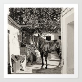 black horse Golega Portugal Art Print