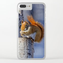 Winter Beauty - American Red Squirrel Clear iPhone Case