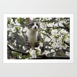 Japanese cat is admiring the cherry blossoms. Art Print