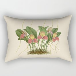 File:R. Warner & B.S. Williams - The Orchid Album - vol 01 - plate 005 Rectangular Pillow