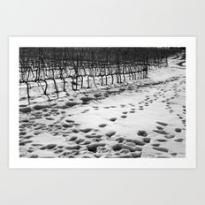 Snowy Vineyard Art Print