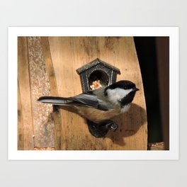 Black-Capped Chickadee at the Feeder Art Print