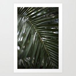 Plant - Fern 2 Art Print