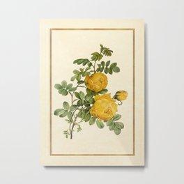 Rosa Sulfurea - Yellow Rose Vertical Metal Print