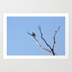 The Magpie that Comes and Goes Art Print