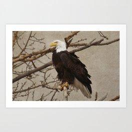 Proud Eagle Art Print
