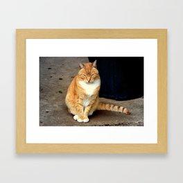 Straighten Up Framed Art Print