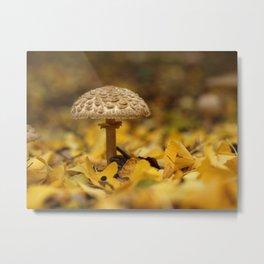 Lepiota Mushroom Under The Ginkgo Tree... Metal Print