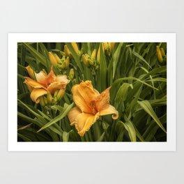 Orange Daylilies Art Print