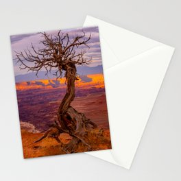 Canyonlands National Park Tree Panoramic Print Stationery Cards