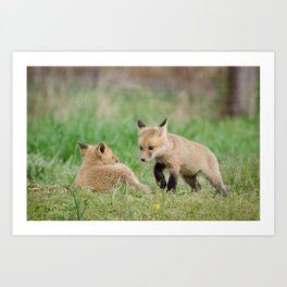 Coming to Get You (Baby Foxes) Animal / Wildlife Photograph Art Print