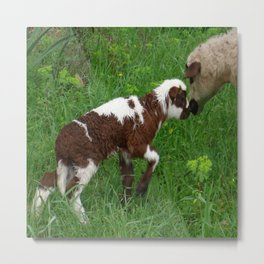 Cute Brown and White Lamb with Ewe  Metal Print