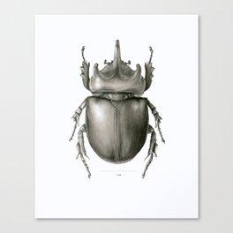 Ox Beetle/Strategus antaeus Canvas Print