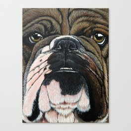 Beggin' Bully Canvas Print