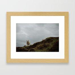Two Sheep. Framed Art Print