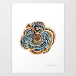 """Trametes """"Turkey Tail"""" Mushroom Art Print"""