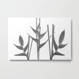 Three Heliconia black white Design Metal Print