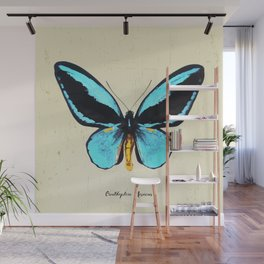 Butterfly01_Ornithoptera  Aesacus Wall Mural