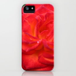 Dew Drops on a Rose iPhone Case