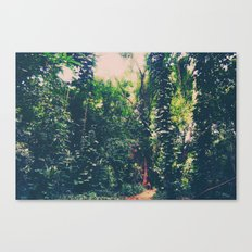 Rainforest, Maui  Canvas Print