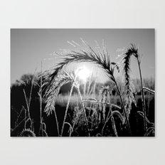 Wheat Sunrise B&W Canvas Print