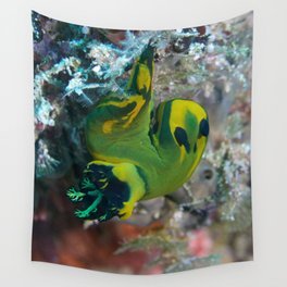Squishy nembrotha nudi hanging on for dear life Wall Tapestry