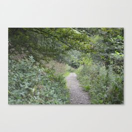 Footpath in a Forest Canvas Print