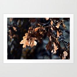 Winter oak leaves Art Print