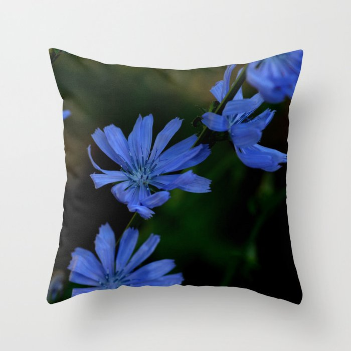 Eyes as blue as chicory blooms Throw Pillow