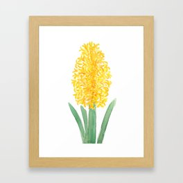 yellow hyacinth watercolor Framed Art Print