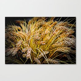 Ears Of Wheat. Thanksgiving theme Canvas Print