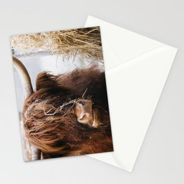 Highland cow feeding on straw on a frosty winters morning. Norfolk, UK. Stationery Cards