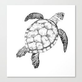 Sea Turtle - Pen and Ink Illustration Canvas Print