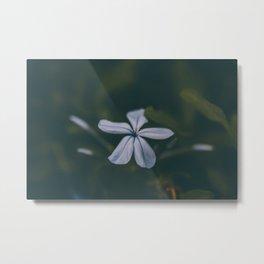 Blue in Bloom Metal Print
