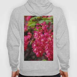 Bee and Blood Currant Ribes Sanguineum std Hoody
