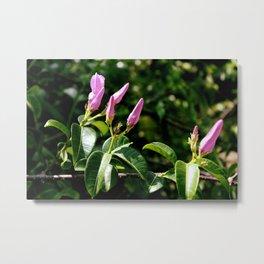 Flowering in Mexico Metal Print
