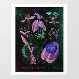 Botanical Study #3, Vintage Botanical Illustration Collage Art Art Print
