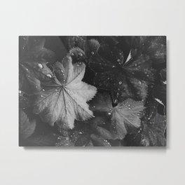 Designed by Nature V Metal Print