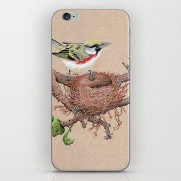 Chestnut Sided Warbler in Nest iPhone Skin