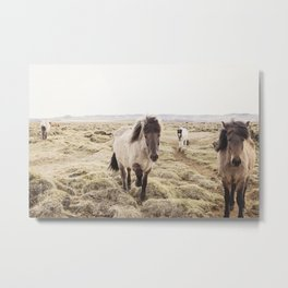 Horse Photograph in Color Metal Print