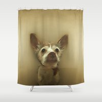 renaissance Shower Curtains featuring Dog: Tintin in Renaissance by marynate
