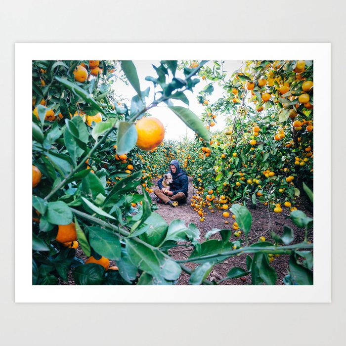Valencian Orange Grove Art Print