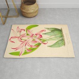 LAELIA AUTUMNALIS Vintage Botanical Floral Flower Plant Scientific Illustration Rug
