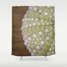 Sea Urchin Shower Curtain
